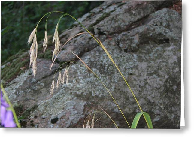 Weeping Grass Greeting Card