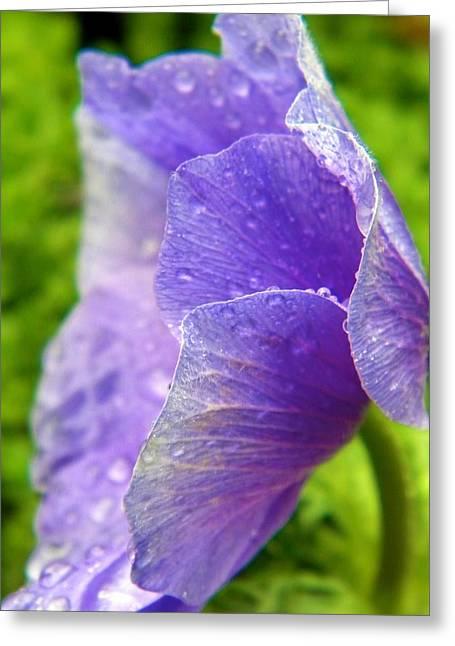 Weeping Petals Greeting Card