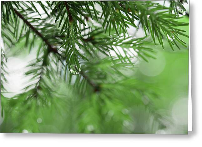 Weeping Pine 2 Greeting Card