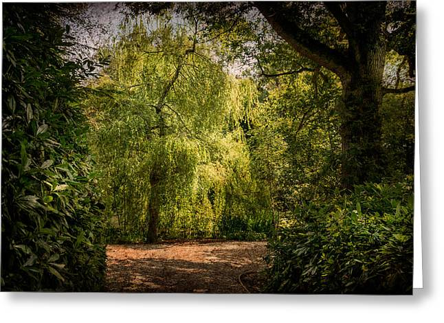 Greeting Card featuring the photograph Weeping Willow by Ryan Photography