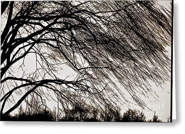 Weeping Willow Tree  Greeting Card by Carol F Austin