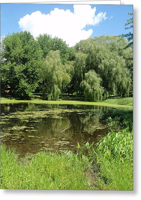 Greeting Card featuring the photograph Weeping Willows Pere Marquette by Beth Akerman