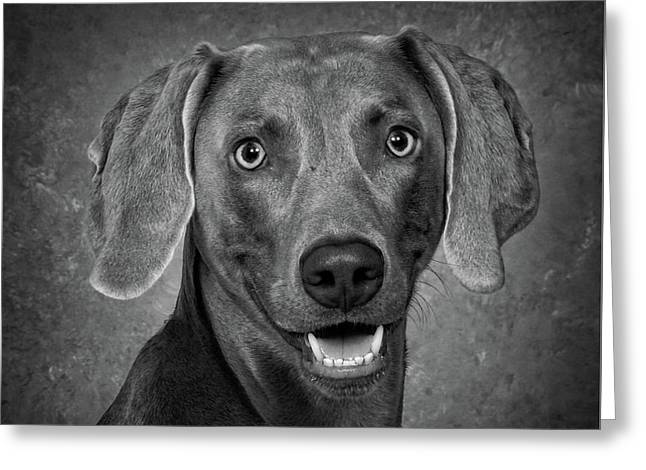Greeting Card featuring the photograph Weimaraner In Black And White by Greg Mimbs
