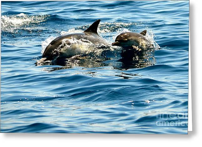 Dolphin Art Print Greeting Cards - Welcome  Greeting Card by Johanne Peale