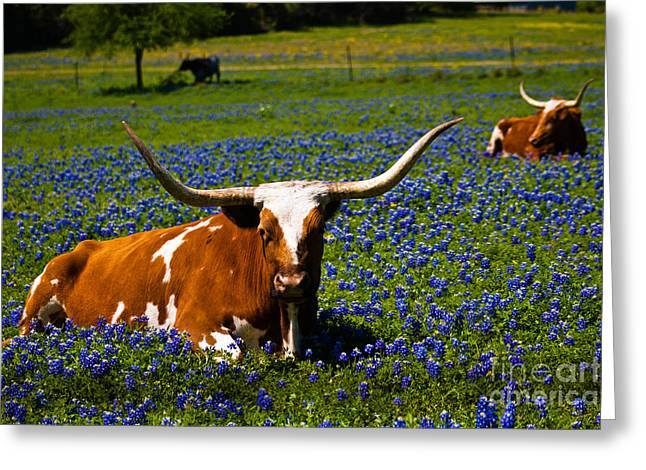 Welcome To Texas Greeting Card by John Stanisich