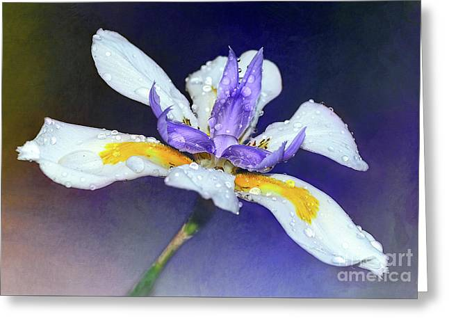 Greeting Card featuring the photograph Welcoming Iris By Kaye Menner by Kaye Menner