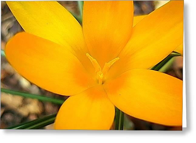 Welcoming Spring Greeting Card by Beth Akerman