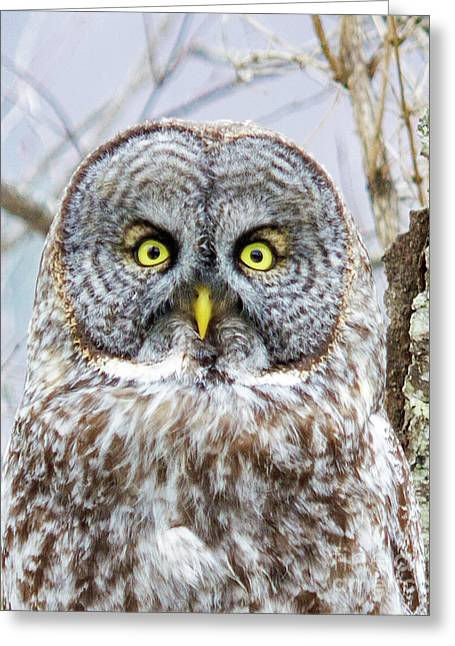 Well Hello - Great Gray Owl Greeting Card by Lloyd Alexander