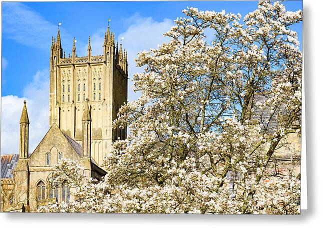 Wells Cathedral And Spring Blossom Greeting Card