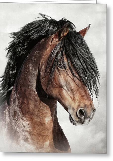 Welsh Cob Portrait Greeting Card