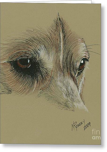 Welsh Corgi Eyes Greeting Card by Norma Rowley