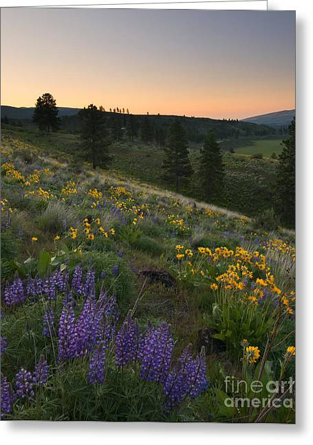 Wenas Spring Sunrise Greeting Card by Mike Dawson