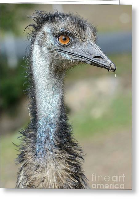 Emu 2 Greeting Card
