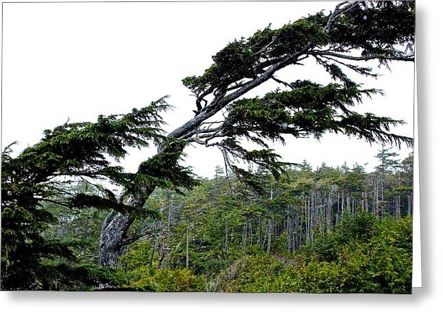 West Coast  Trees In Rain Greeting Card by Brian Sereda