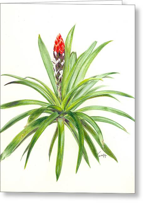 West Indian Tufted Air Plant Greeting Card