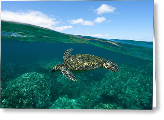 West Maui Green Sea Turtle Greeting Card