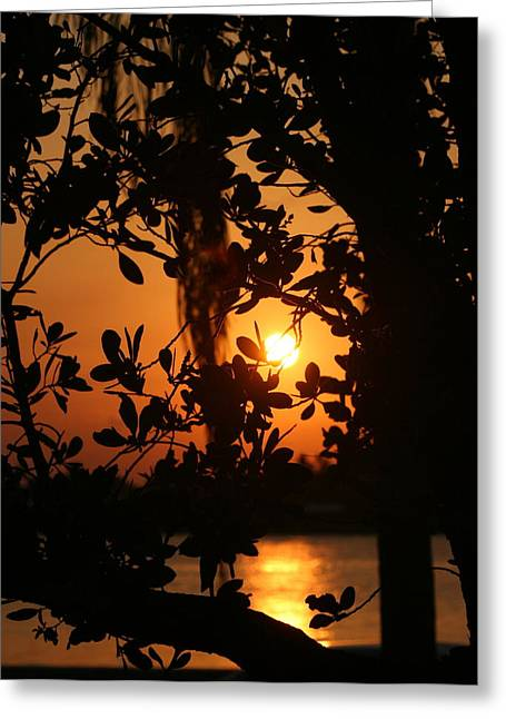 Greeting Card featuring the photograph West Palm Beach Sunrise by Diane Merkle