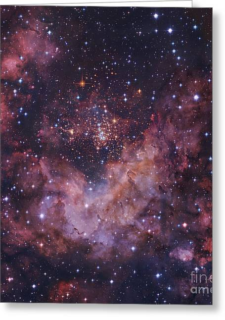 Westerlund 2 Star Cluster In Carina Greeting Card by Robert Gendler