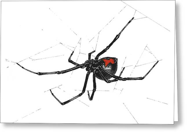 Western Black Widow - Color Greeting Card