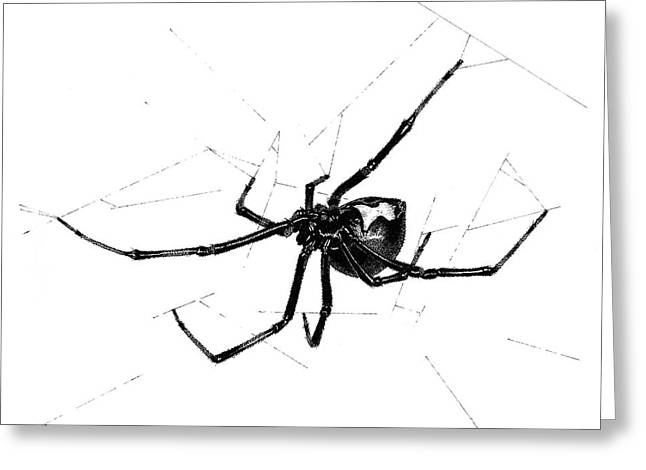Western Black Widow Greeting Card