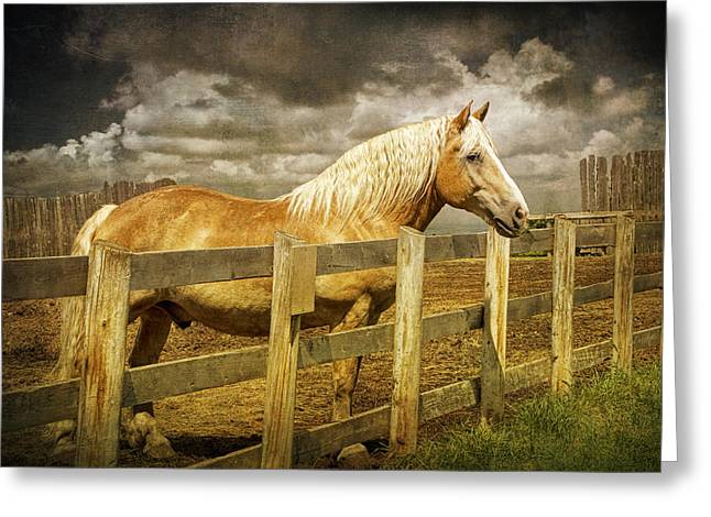 Western Horse In Alberta Canada Greeting Card by Randall Nyhof