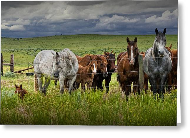 Western Horses In A Pasture No. 1211 Greeting Card by Randall Nyhof