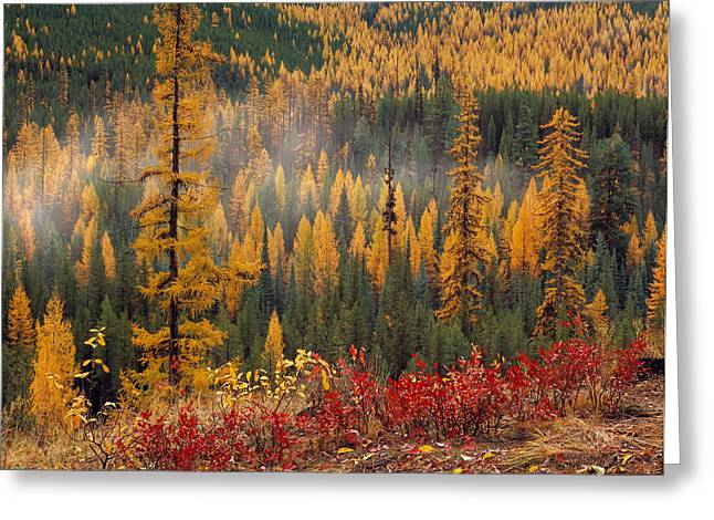 Western Larch Forest Autumn Greeting Card by Leland D Howard