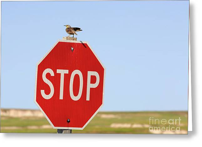 Western Meadowlark Singing On Top Of A Stop Sign Greeting Card by Louise Heusinkveld