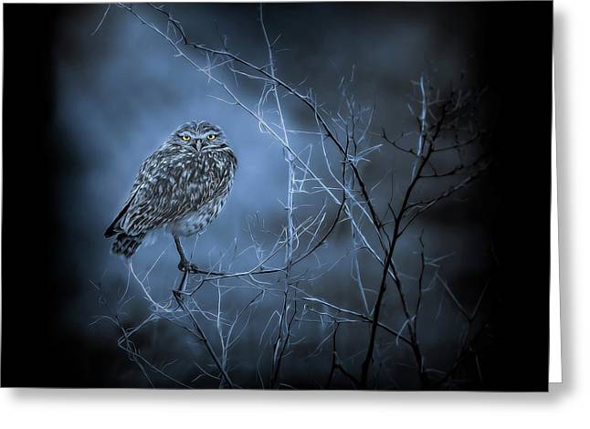 Greeting Card featuring the photograph Western Owl Gloom by Rikk Flohr