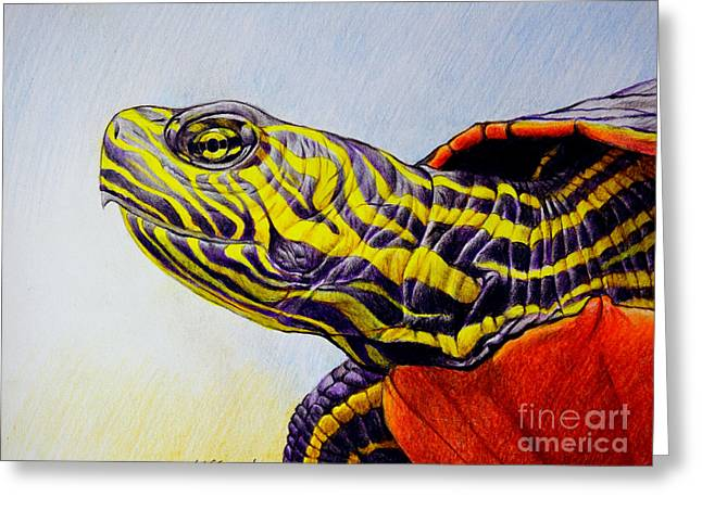 Western Painted Turtle Greeting Card