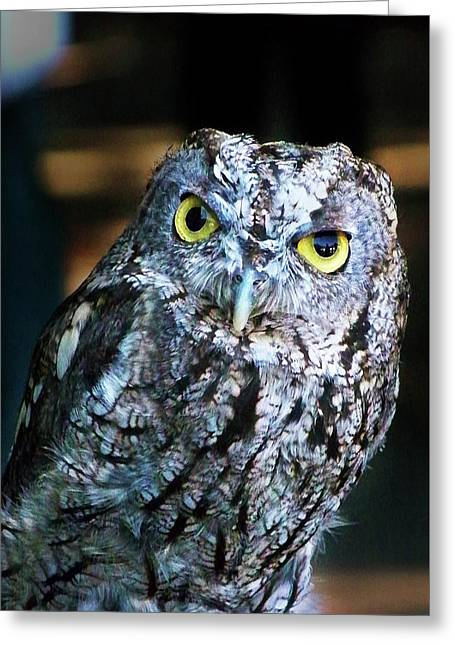 Greeting Card featuring the photograph Western Screech Owl by Anthony Jones