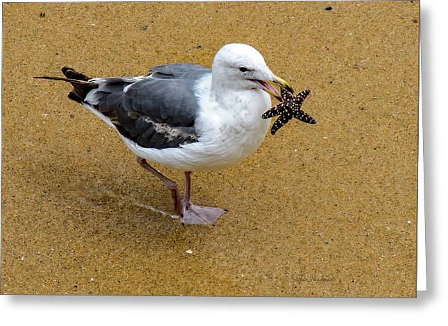 Western Seagull Carrying A Starfish Greeting Card