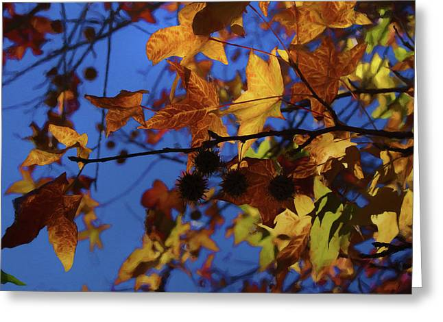 Western Sycamore Color Changing Greeting Card by Ernie Echols