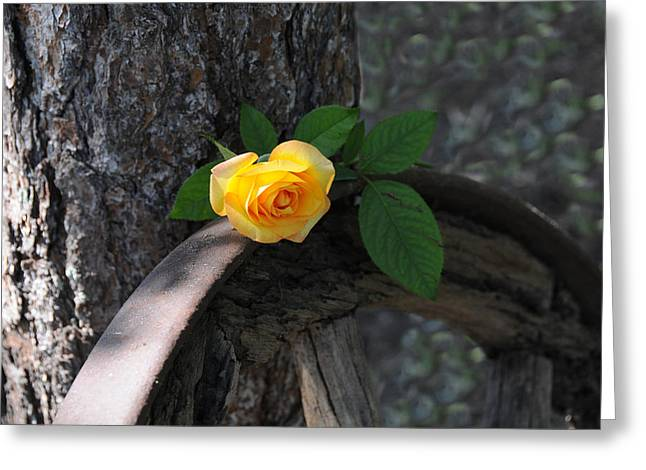 Western Yellow Rose II Greeting Card