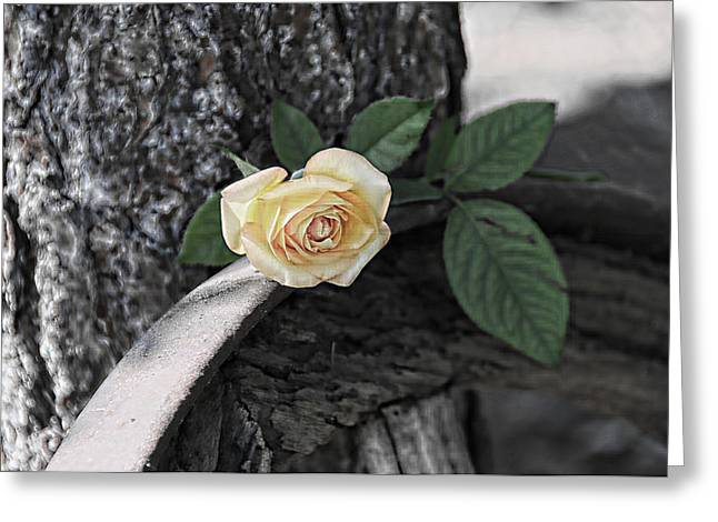 Western Yellow Rose Iv Greeting Card