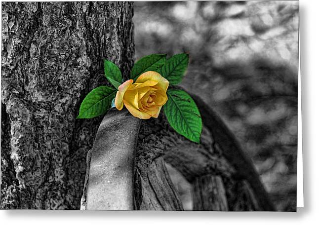 Western Yellow Rose Two Tone Greeting Card