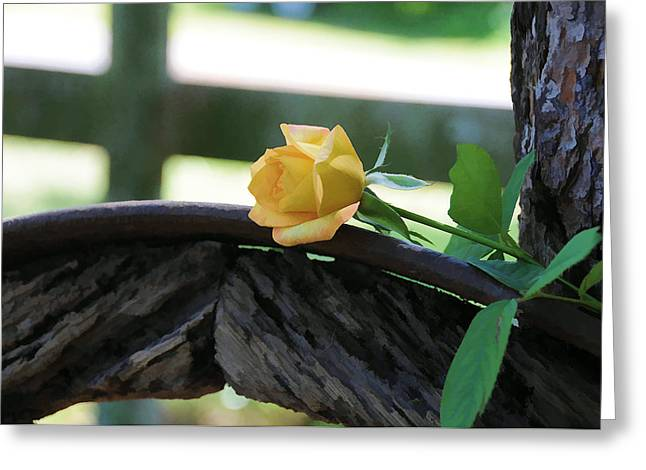 Western Yellow Rose Vii Greeting Card