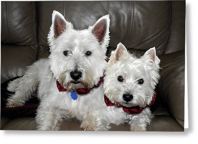 Greeting Card featuring the photograph Westie World by Geraldine Alexander
