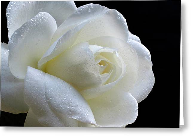 Wet Beauty. Greeting Card by Terence Davis