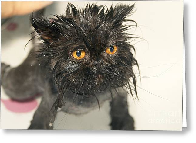 Wet Cat Greeting Card