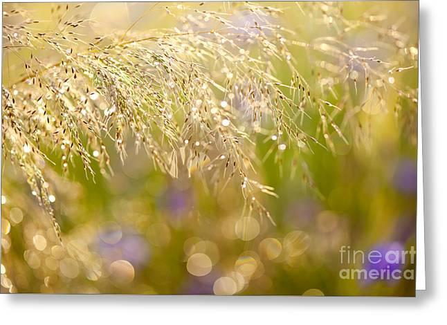 Wet Grass In Bokeh Circles Greeting Card by Arletta Cwalina