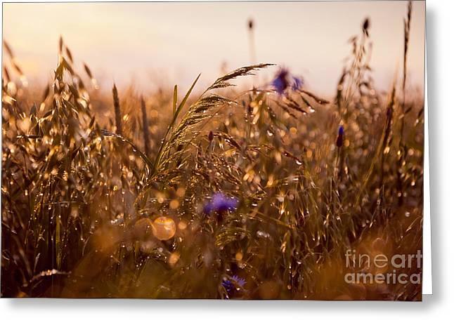 Wet Grass In Sunset Light Greeting Card by Arletta Cwalina