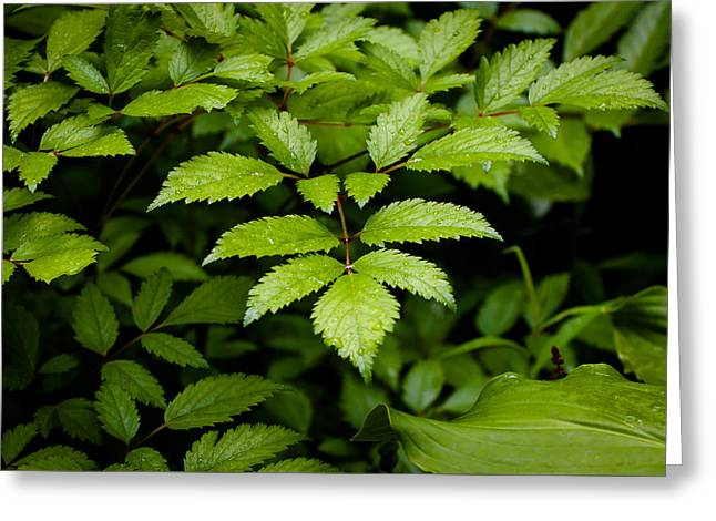 Greeting Card featuring the photograph Wet Green Leaves by Monte Stevens