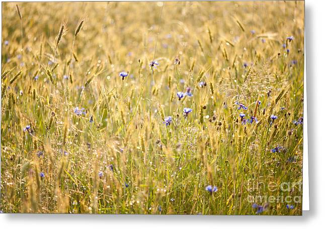 Wet Meadow After The Rain Greeting Card by Arletta Cwalina