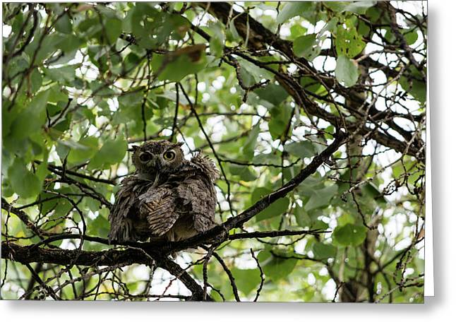 Wet Owl - Wide View Greeting Card