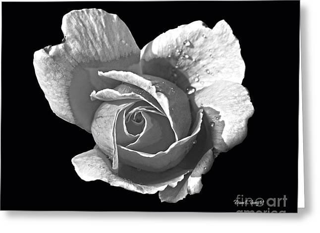 Wet Rose Portrait Greeting Card