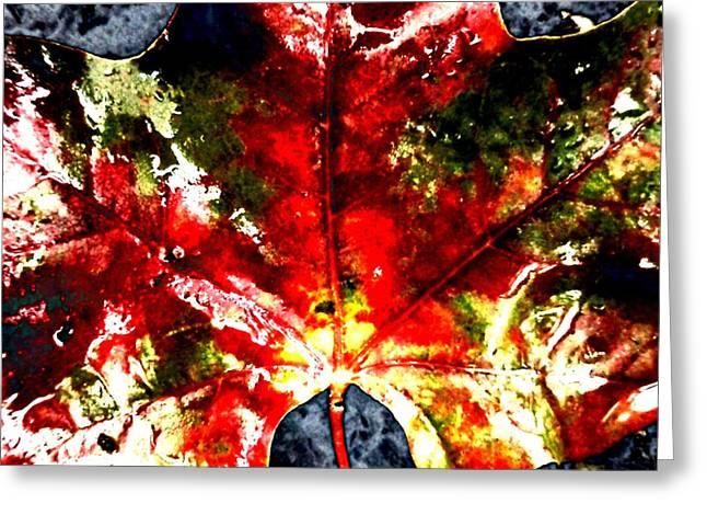 Wet Single Leaf Greeting Card by Beth Akerman