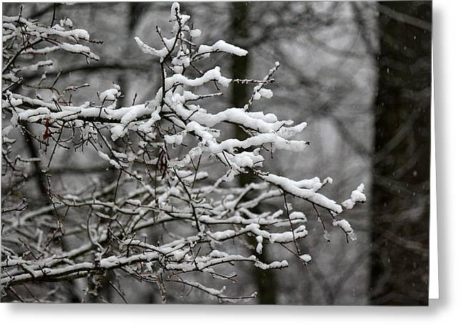 Wet Snow Greeting Card by Greg Simmons
