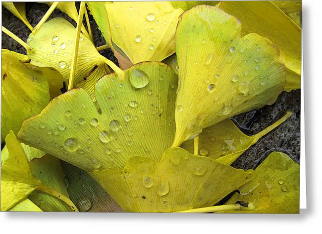 Wet Yellow Leaves 2 Wc  Greeting Card by Lyle Crump