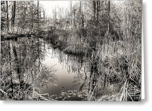 Wetland Essence Greeting Card by Betsy Zimmerli